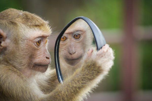 zelfreflectie zelfevaluatie